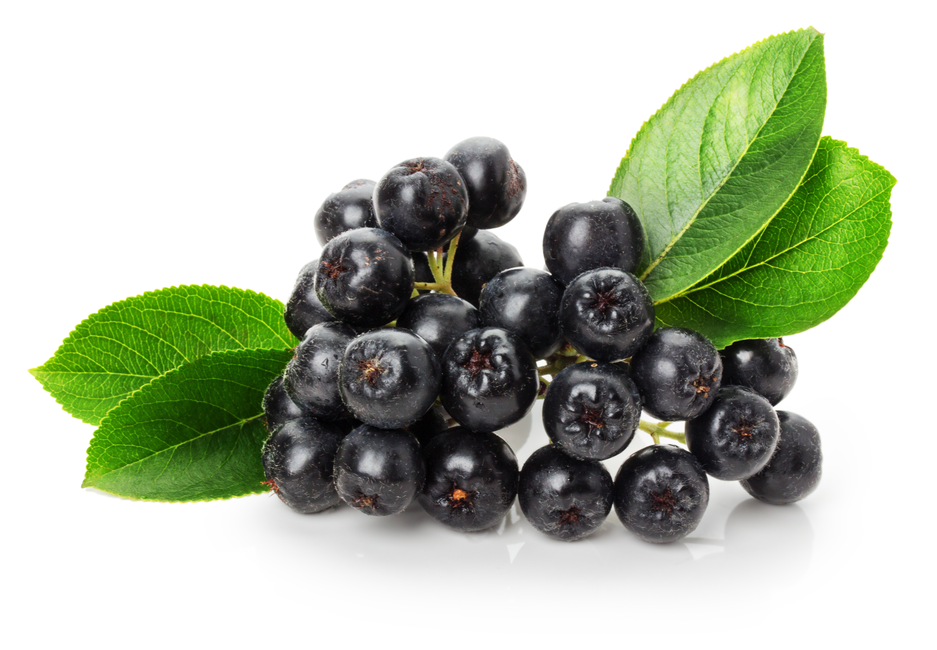 Introducing the aronia berry